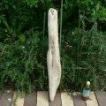 根っこ・幹の流木(中)「空洞」