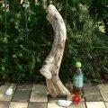 根っこ・幹の流木(小)「花明」