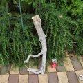 アートな流木(中)「指先」