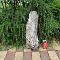 アートな流木(中)「玄人」