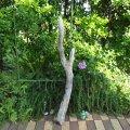 根っこ・幹の流木(中)「冷温」