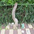根っこ・幹の流木(小)「雪輪」