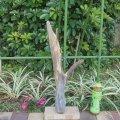 根っこ・幹の流木(小)「兎」
