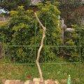 枝・棒の流木(大)「海蛇」