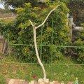 枝・棒の流木(大)「紫陽花」