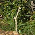 枝・棒の流木(中)「鯔」