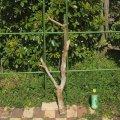 枝・棒の流木(中)「緋」