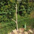 枝・棒の流木(中)「椿」