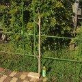 枝・棒の流木(中)「九戸」