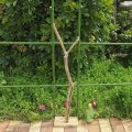 枝・棒の流木(中)