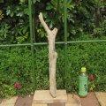 枝・棒の流木(小)