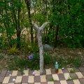 根っこ・幹の流木(中)「春紫苑」