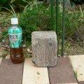 根っこ・幹の流木(小)「緑青」