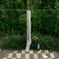 根っこ・幹の流木(中)「山犬」
