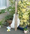 板・角棒の流木(中)「固焼き煎餅」
