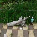 根っこ・幹の流木(小)「常夏」