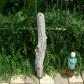 根っこ・幹の流木(小)「海猫」