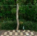 根っこ・幹の流木(中)「寒椿」