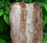 板・角棒の流木(小)