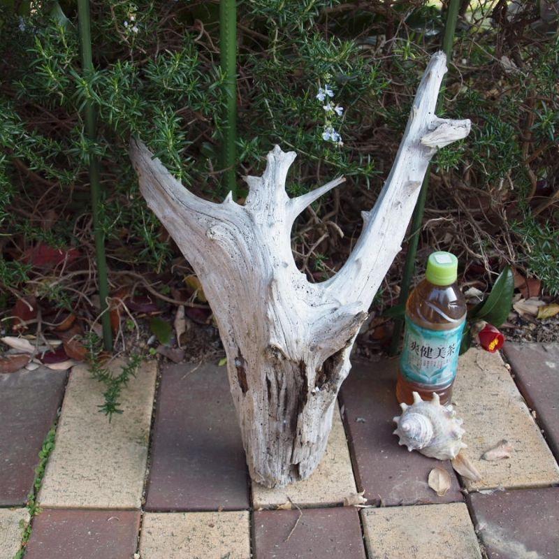 アートな流木(小)「白炭」 - 五島列島 渚の家