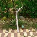 根っこ・幹の流木(中)「犬蓼」