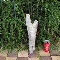 アートな流木(小)「描写」