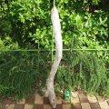 根っこ・幹の流木(中)「風景」