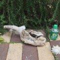 アートな流木(小)「鳩麦」