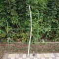 自然木(中)「笹竹」