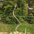 枝・棒の流木(大)「蝮」