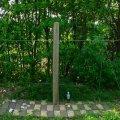 根っこ・幹の流木(中)「華麗」