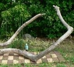 枝・棒の流木(大)